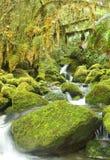 Koud Regenwoud in Nieuwe Zeland Stock Afbeelding