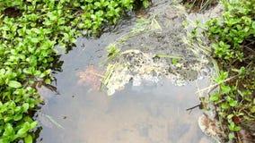 Koud water van van de de stroomblaasbalg van de geurstroom de kleine waterkering onder houten brug Natuurlijke waterkering met ri stock videobeelden