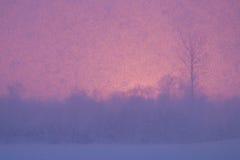 Koud weer in Estland Royalty-vrije Stock Foto