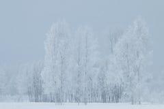 Koud weer in Estland Stock Fotografie