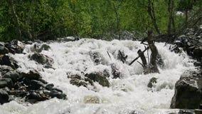 Koude bergrivier met woedende stroom Mening van de woedende rivier in het bos stock videobeelden