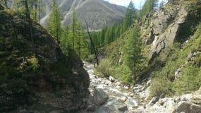 koude bergrivier van de Republiek Buryatia stock foto
