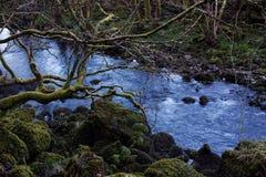 Koude Blauwe Bergstroom stock fotografie