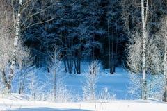 Koude dag in het sneeuw de winterbos Stock Foto's