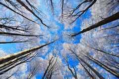 Koude dag met rijp De winterlandschap met rijptreetop en donkerblauwe hemel Sneeuwbos met ijs op de boomboomstam De winter in Eur Royalty-vrije Stock Afbeelding