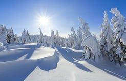 Koude de winter zonnige dag Geheimzinnig, geheim, fantastisch, wereld van bergen Op het gazon met sneeuw de aardige bomen wordt b stock foto