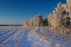 Koude de winterdag Royalty-vrije Stock Foto