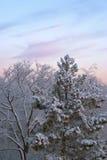 Koude de winterochtend Royalty-vrije Stock Afbeelding