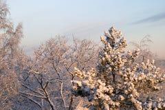 Koude de winterochtend Royalty-vrije Stock Fotografie