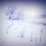 Koude de winterochtend Stock Foto's