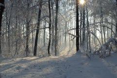 Koude de winterochtend Royalty-vrije Stock Foto's