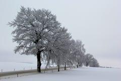 koude de wintersdag Stock Afbeelding