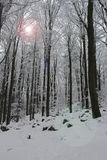 koude de wintersdag Stock Fotografie