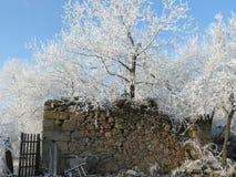 Koude en sneeuwokkernoot over een oude schuurinstorting Royalty-vrije Stock Fotografie