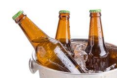 koude flessen bier in emmer met ijs op witte achtergrond Stock Fotografie