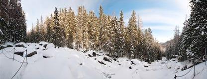 Koude Kreek in NP Hoge Tatras, Slowakije Stock Afbeelding
