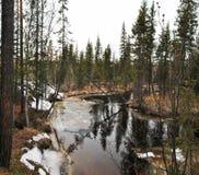 Koude rivier in taiga Royalty-vrije Stock Fotografie