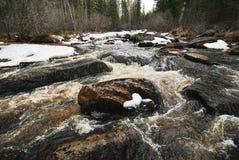 Koude snelle rivier Stock Fotografie