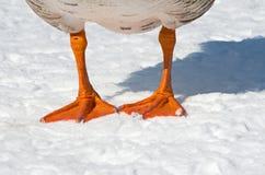 Koude voeten Stock Foto