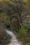 Kouiasabrug in de Herfst royalty-vrije stock fotografie
