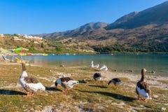 Kournas湖。克利特,希腊 图库摄影
