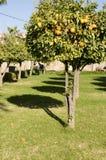 Koutoubia Garten, Marrakesch. Lizenzfreie Stockbilder