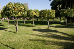 koutoubia ogrodniczego Marrakeszu obrazy stock
