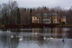 KOUVOLA FINLAND - NOVEMBER 8, 2018: TräRabbelugn säteri - Takamaan Kartano i mörk höstdag Svanar simmar i vatten arkivbild