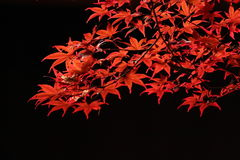 Kouyou Fotografie Stock