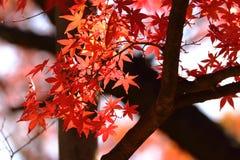 Kouyou Fotografia Stock