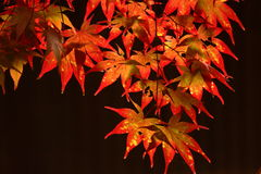 Kouyou. Autumn in Japan, the leaves of the trees change to beautiful colors Stock Photos