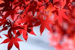 Kouyou2. Autumn in Japan, the leaves of the trees change to beautiful colors Stock Images