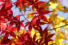 Kouyou3. Autumn in Japan, the leaves of the trees change to beautiful colors Stock Photo