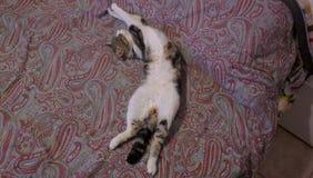 łóżkowa kota kopii przestrzeń Obrazy Stock