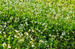 Łąkowa trawa Fotografia Royalty Free