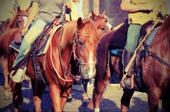 Kowboj w pocięglu koń Obrazy Royalty Free
