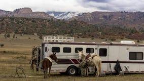 Kowboje stawiają combery na końskim narządzaniu jechać om Kolorado Nowy zdjęcie stock