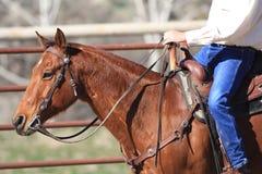 Kowbojska jazda Jego koń Fotografia Royalty Free