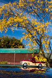 Kowhai Pickup Load Stock Photos