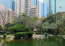Kowloon Park and Hong Kong Skyline. Kowloon Park is lung of  Hong Kong. It is in center of the city Royalty Free Stock Image