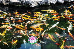 Koy fish in the The Jade Buddha Temple shanghai china Royalty Free Stock Photos