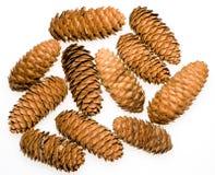 Koyamai Spruce Cones Stock Image