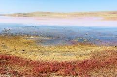 Koyashskoye salt lake Stock Photography