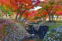 Koyo in japan Royalty Free Stock Image