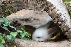 Królika dosypianie w wildpark w Bad Mergentheim zdjęcie royalty free