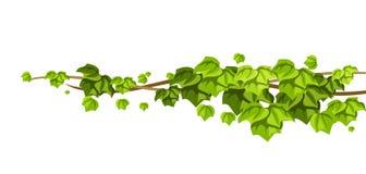Kręcony dziki lian gałąź tło Dżungla winogradów rośliny ilustracja wektor