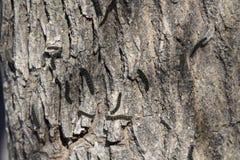 Kräfta avmaskar på trädskäll Arkivfoton