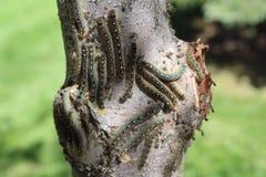 Kräfta avmaskar på trädstammen Arkivbild
