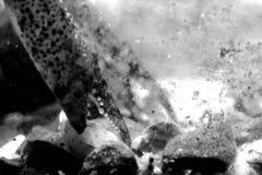 Kräftajordluckraredetalj i svartvitt Royaltyfri Foto