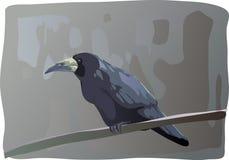 Krähe Lizenzfreie Stockbilder